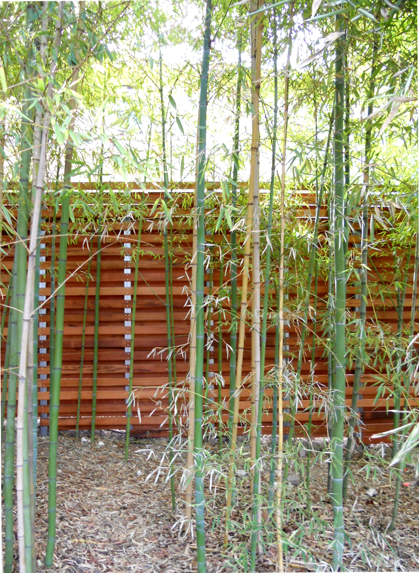 Tigerwood And Steel Fence With