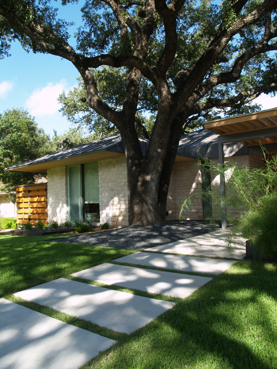 Modern Austin Front Yard Featuring Society Garlic, Asparagus Fern, And  Bamboo Muhly
